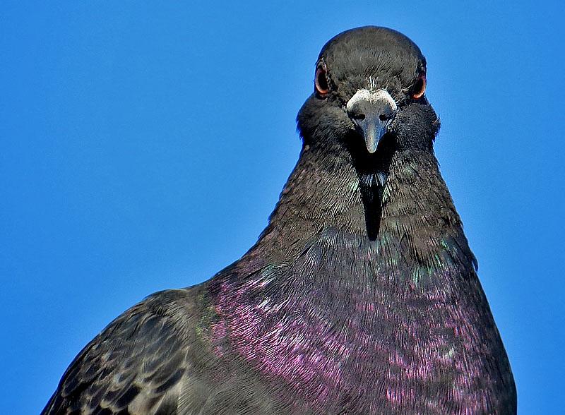 野鳥の怒り2