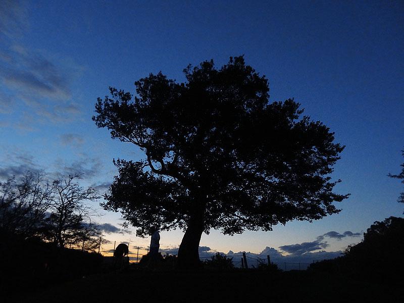 130902今日の虹と夕空と榎の丘6