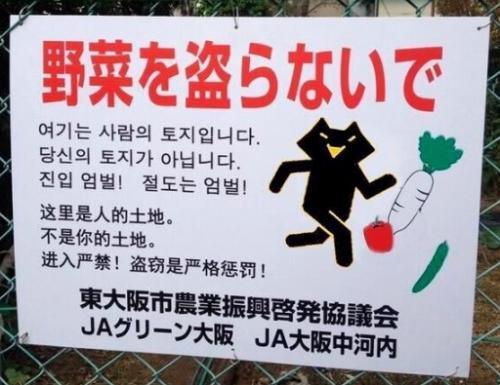 畑泥棒ニダ_convert_20141127142622