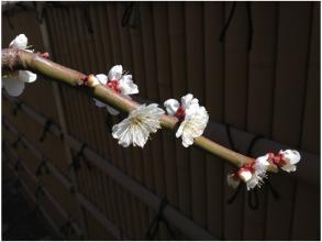 春240320_01