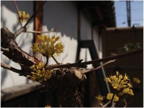 春240320_03