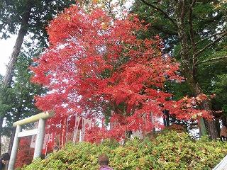 s-PB100282、稲荷神社の紅葉