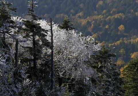 横手山霧氷6ブログ