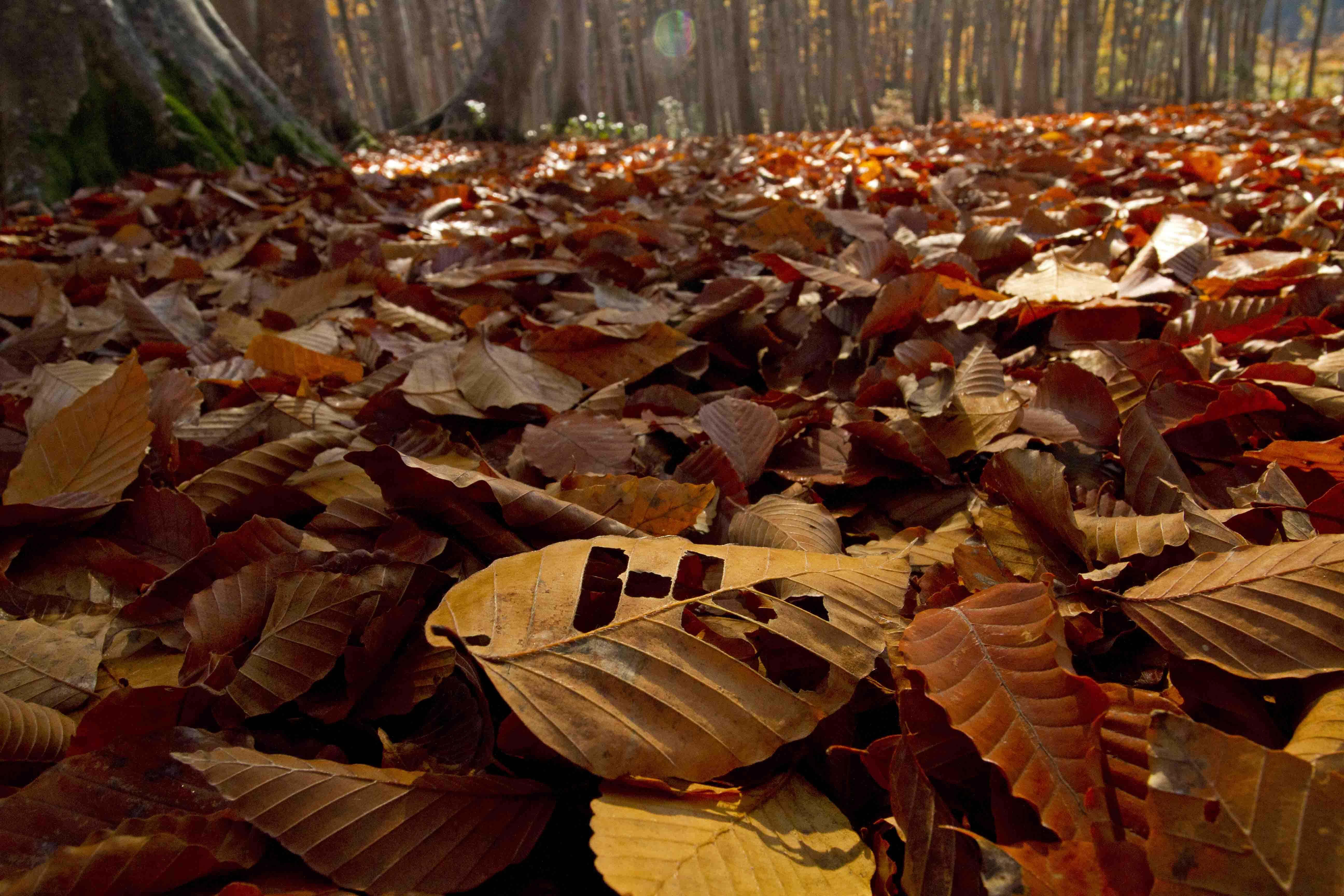 美人林落ち葉ブログ