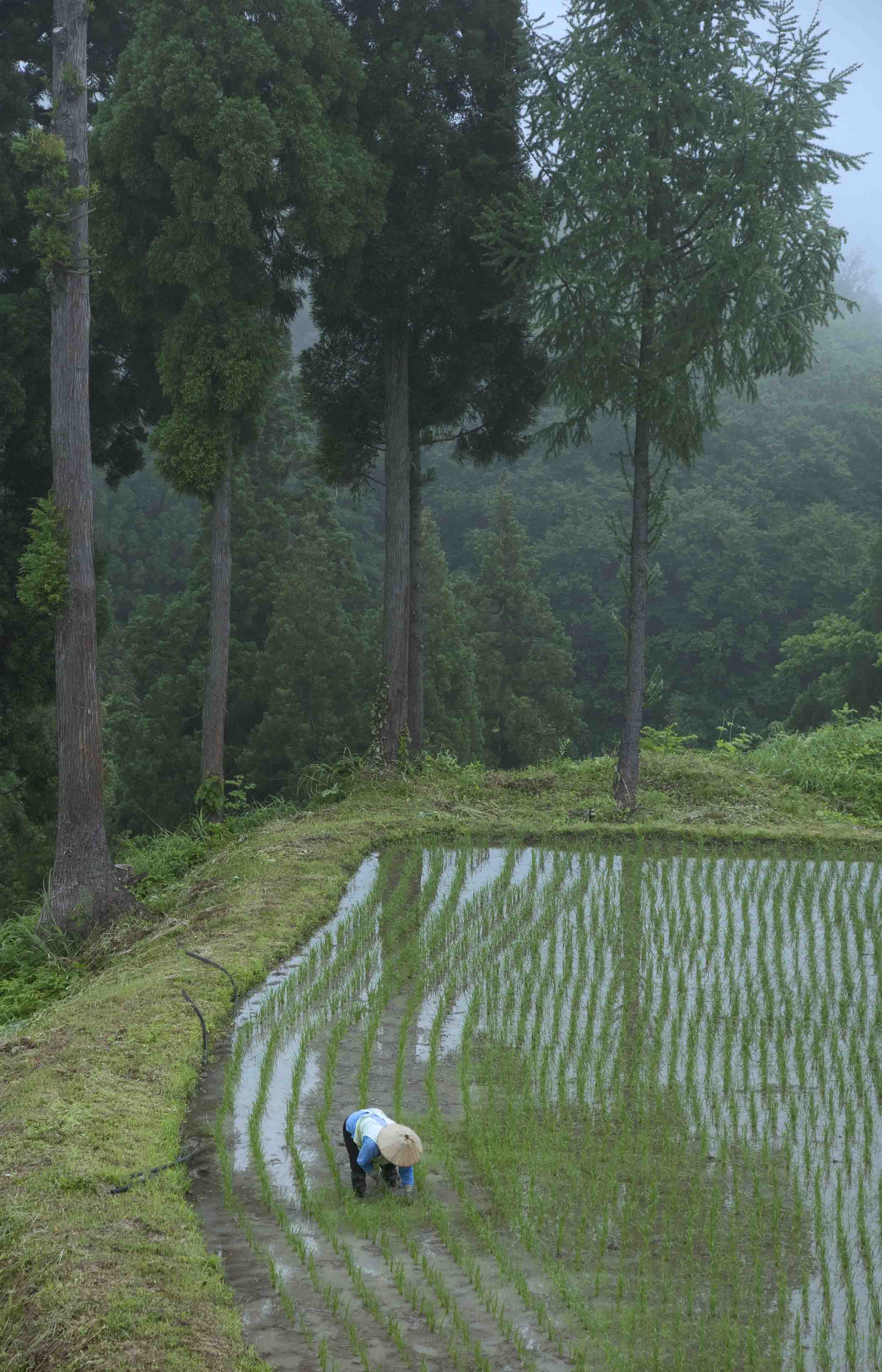 松代農婦ブログ