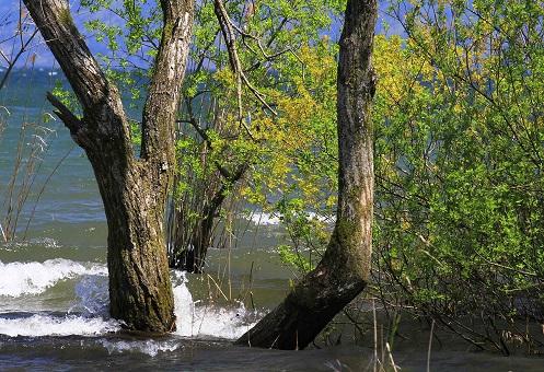 水際新緑ブログ