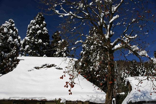 在原雪合掌と柿ブログ