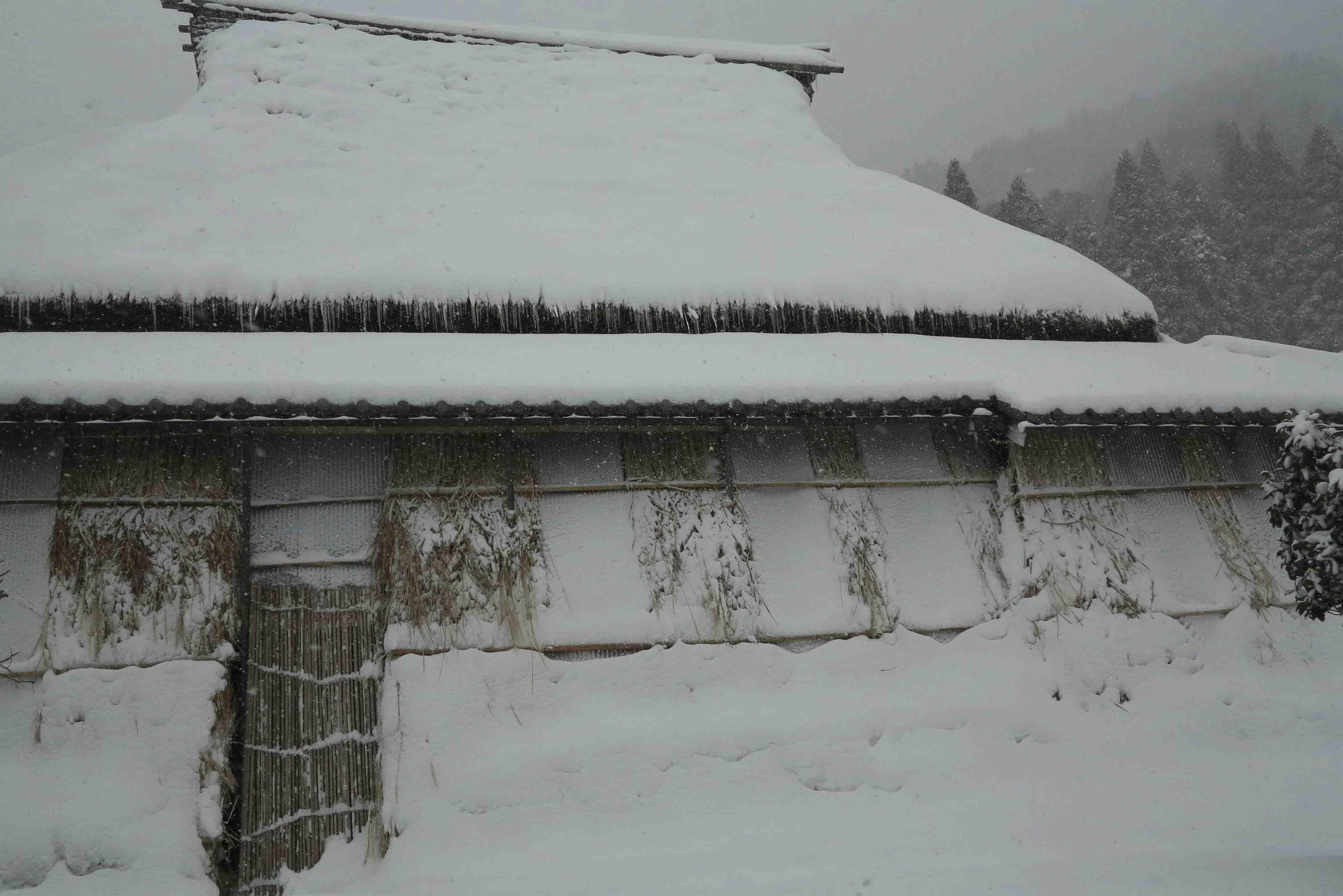 在原菊屋宅雪ブログ