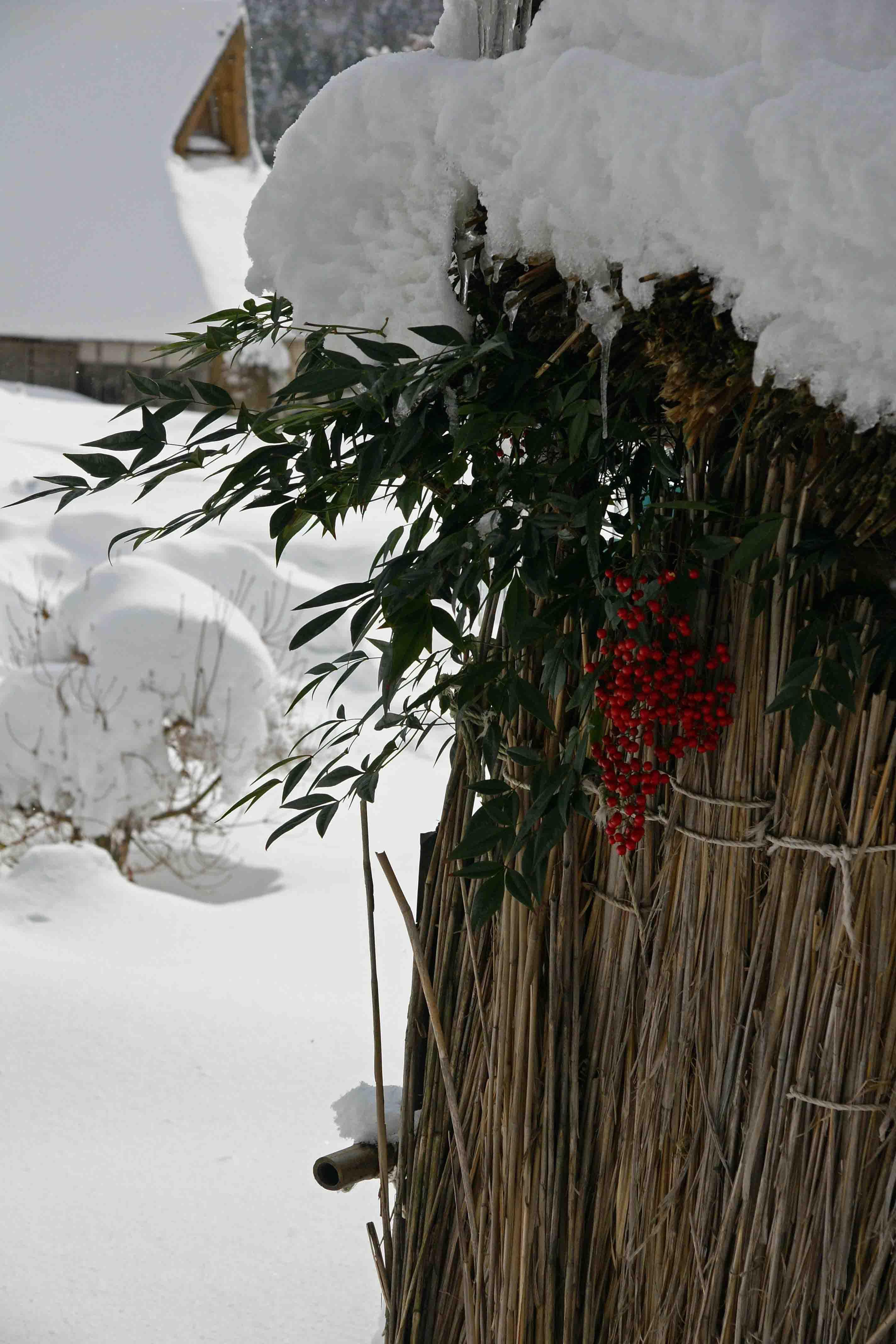 在原雪合掌南天の実ブログ