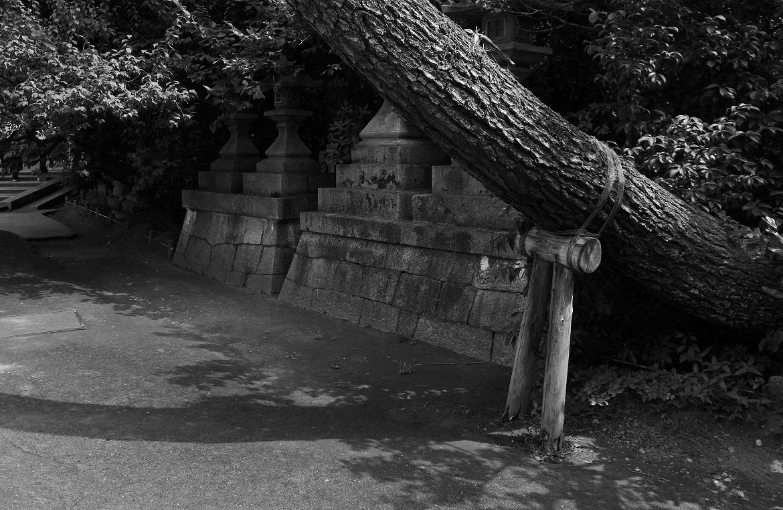 ブログ北野天満宮大木
