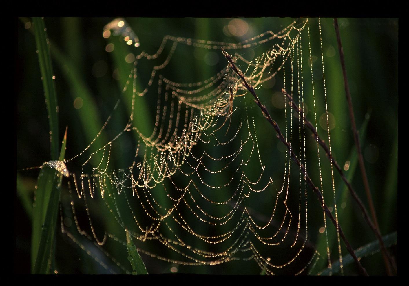 ブログ朝露と蜘蛛巣