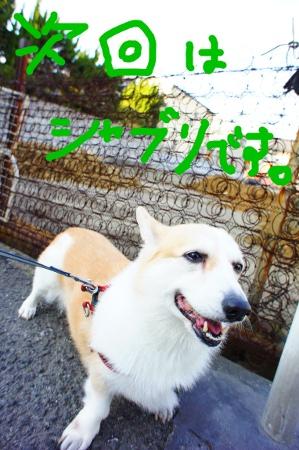 jikaishaburi-.jpg