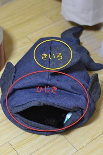 DSC_0120_convert_20130519193531.jpg