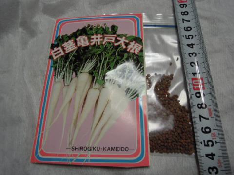 白茎亀井戸大根1