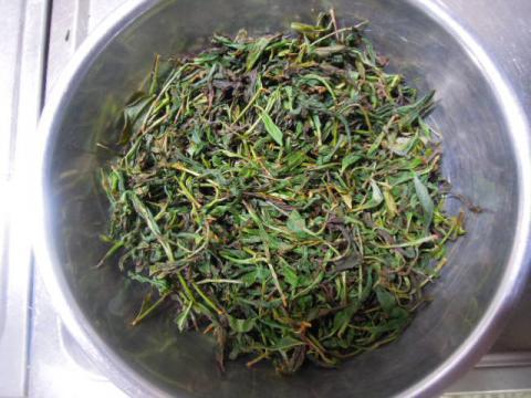 紅茶の葉を揉む