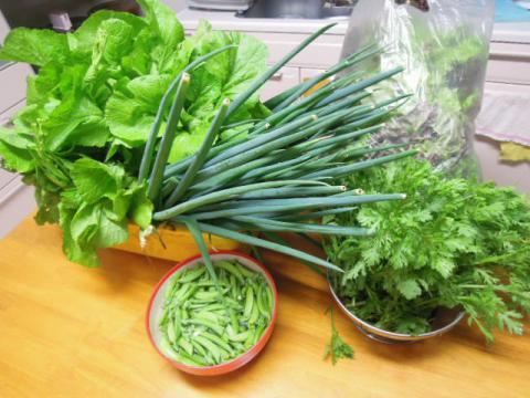 野菜の収穫(5月)
