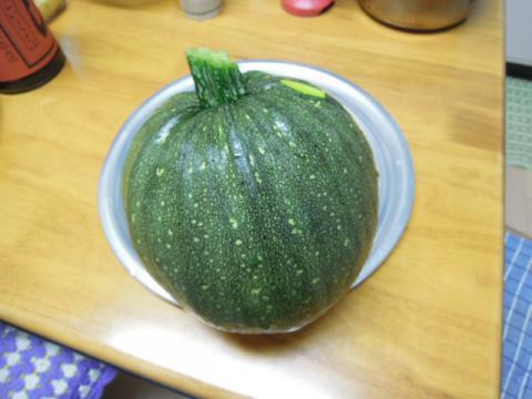 東京南瓜を収穫
