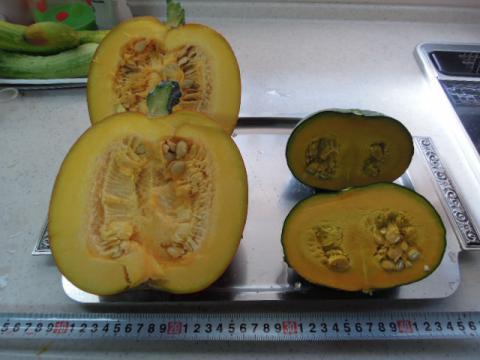 かぼちゃの実の比較