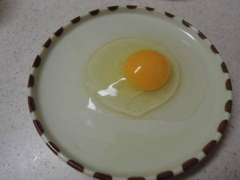 もみじの卵