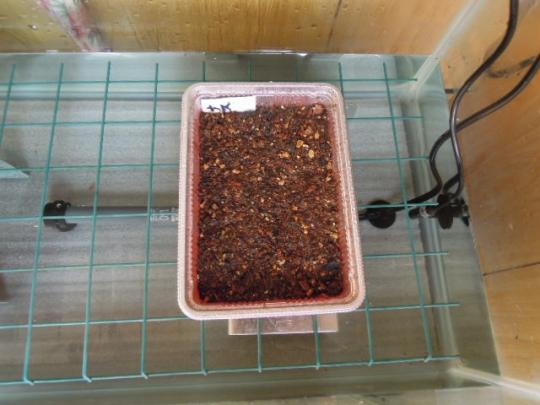 ナスの種蒔き H260201