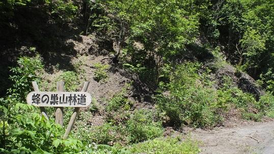 白滝蜂の巣林