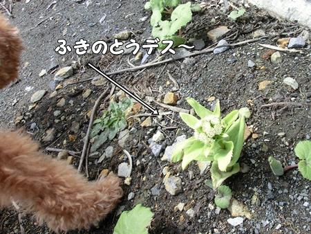 CIMG0121-cropあ