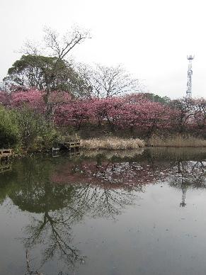 2013_03103D桜0006