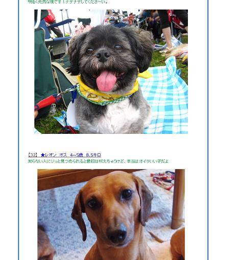 湘南犬親会参加2