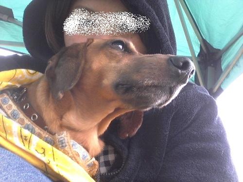 4月犬親会10