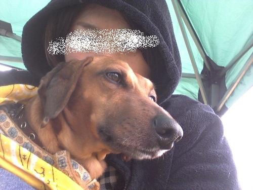 4月犬親会2