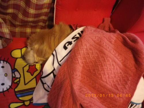 2013年1月15日の朝のラヴィンの寝姿