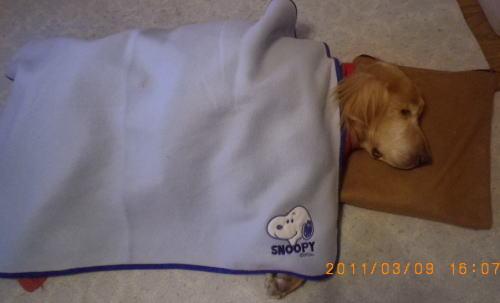 闘病時のラヴィン 2011年3月9日 危篤状態の時