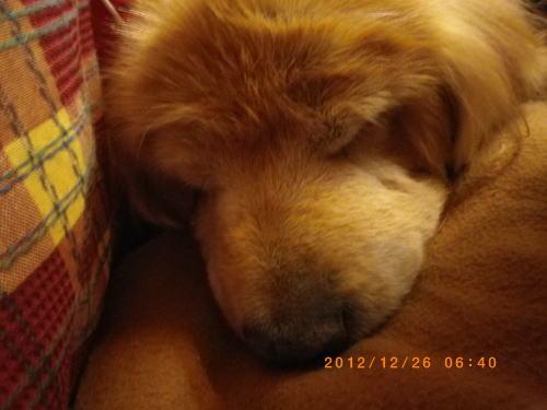 2012年12月26日 寝姿