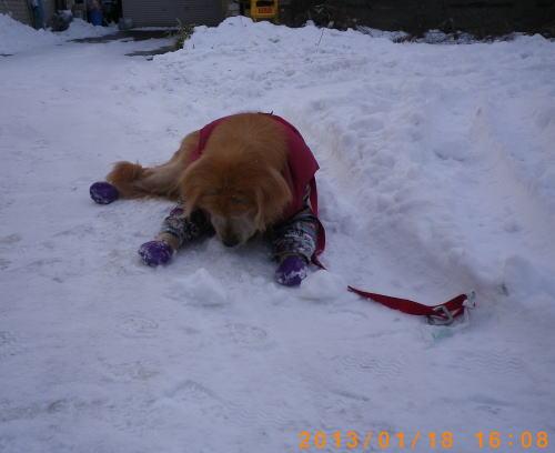 初の雪遊びラヴィン 001