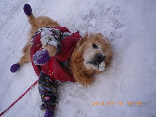 初の雪遊びラヴィン 003