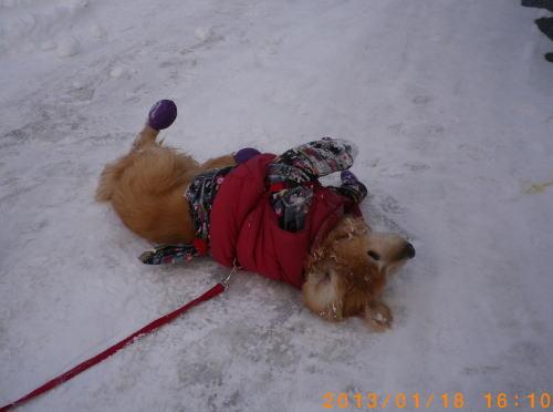 初の雪遊びラヴィン 002