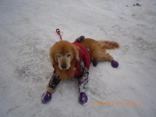 初の雪遊びラヴィン 006