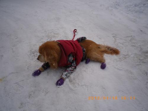 初の雪遊びラヴィン 008