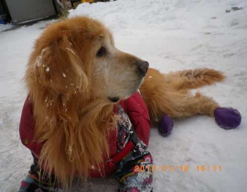 初の雪遊びラヴィン 009