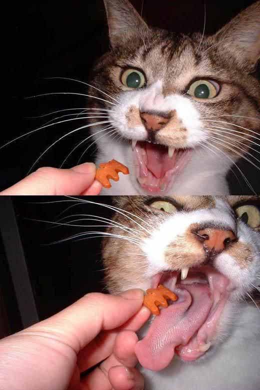 猫・・・!?