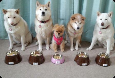 5姉妹わんちゃん