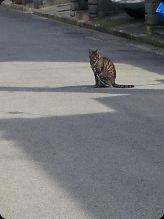 日向ぼっこの猫ちゃん1