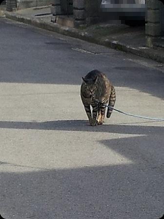 日向ぼっこの猫ちゃん2
