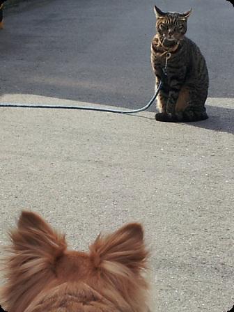 日向ぼっこの猫ちゃん3