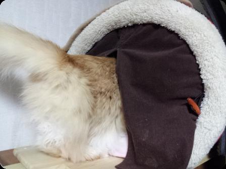 ドームに入る猫
