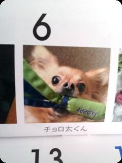 カレンダー チョロ太