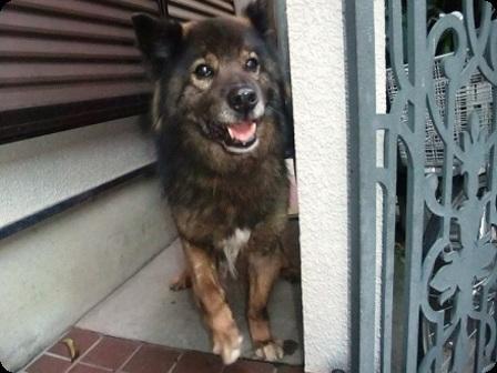 迷子の黒犬1