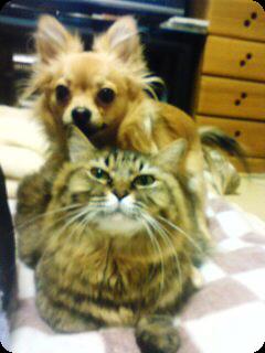 サクラとチョロ3