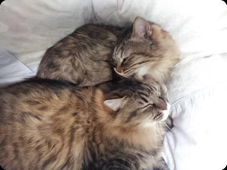 姉妹猫しあわせ♪