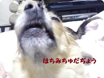 チョロちゃん1
